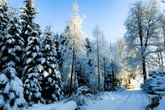 Winter-9512