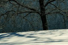 Winter-9619