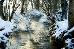 Winter-9652